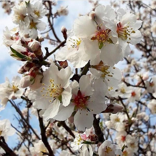 Весна на юге